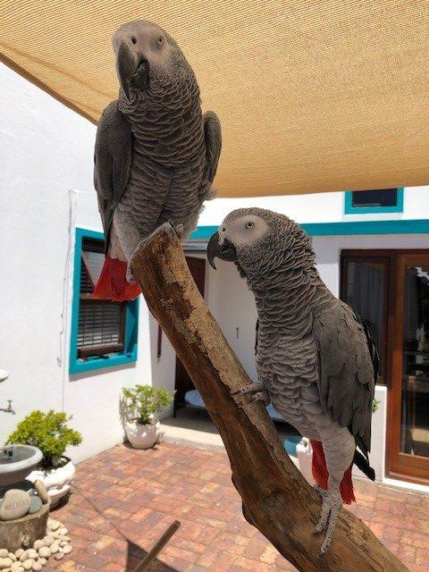 Partner kliniek Zuid-Afrika